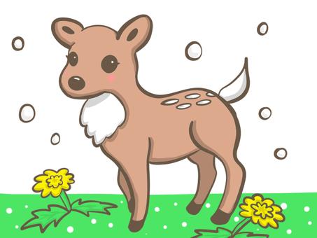 蒲公英和鹿