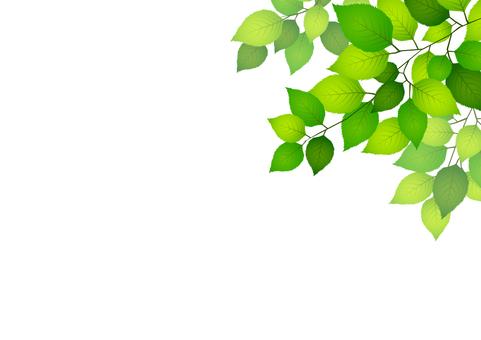Fresh green material 194