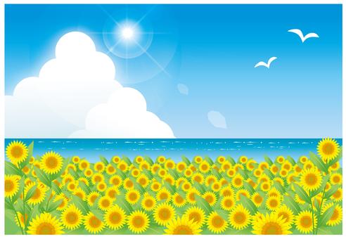 夏天超越向日葵的大海
