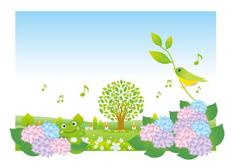 Hydrangea blooms scenery