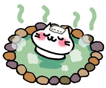 Hot spring cat