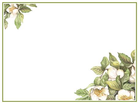 Letter background 2 Christmas rose