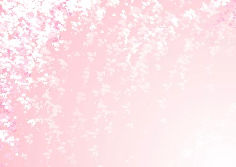 櫻花圖像背景2