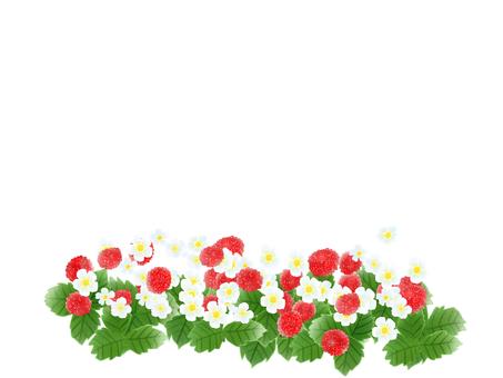 Snake strawberry (snake) white flower and fruit