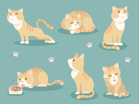 Various cats _ 02
