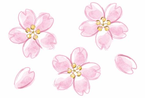 벚꽃 / 벚꽃의 꽃잎
