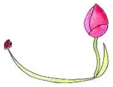 card: tulip and ladybird
