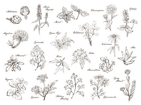 手寫的草藥分類2