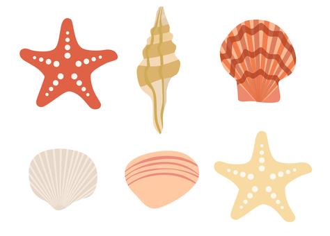 貝殼的插圖
