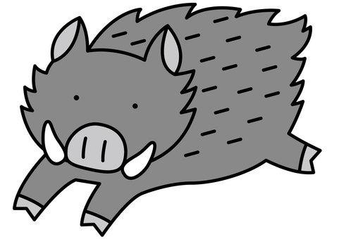 Wild Boar 1-2c