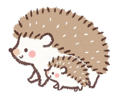 Hedgehog parent and child