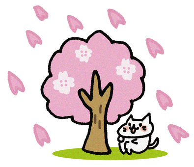 Cherry-blossom viewing cat