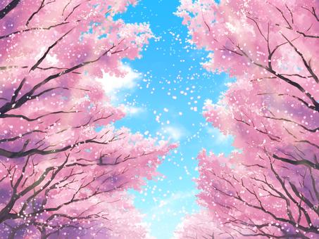 벚꽃길 (꽃잎 있음)