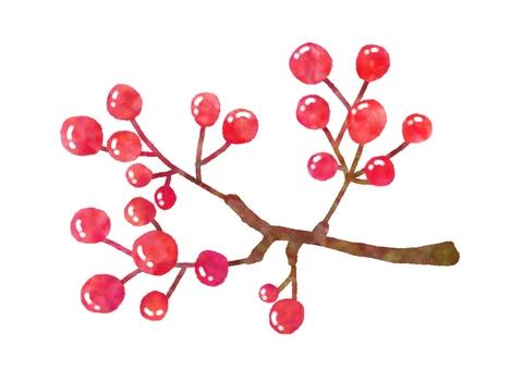 Azuki bean fruit