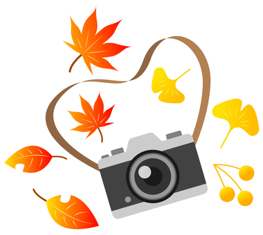 Autumn leaves and cameras