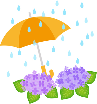 An umbrella and a hydrangea