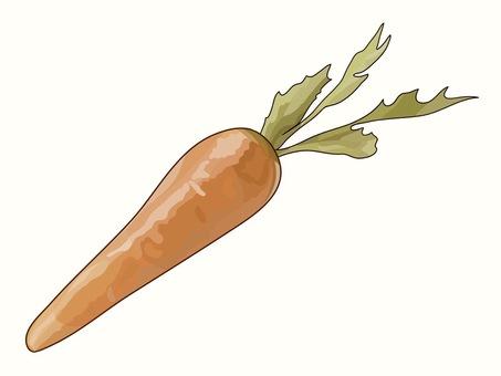 Fresh carrot ② Sepia