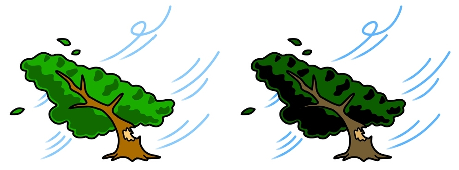 The tree collapses with the wind