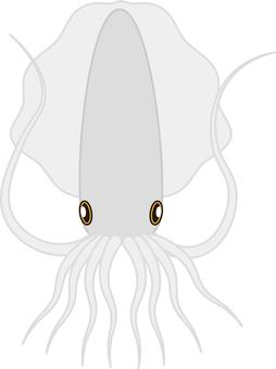 Squid / Squid