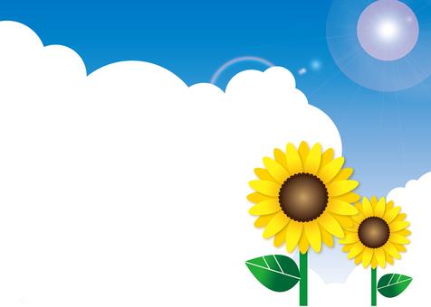 Sunflower - the sky