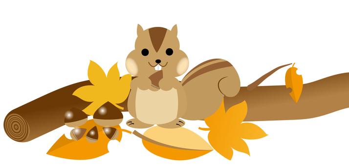 가을 다람쥐