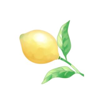 Lemon _01a_06