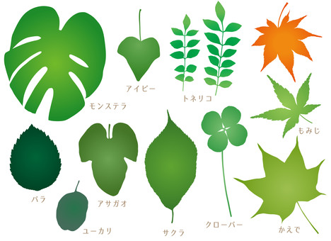 Various leaves silhouette