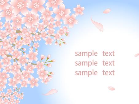 80220.桜風景,背景白4