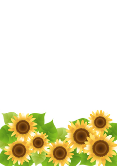 Sunflower 83