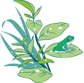 Illustration of a frog