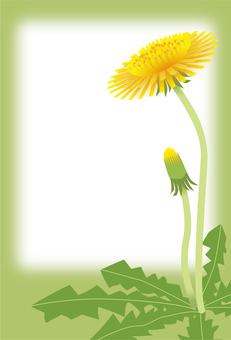 Dandelion postcard