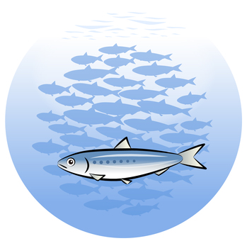 Sardines and flocks