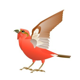Birds (Wahabaki)