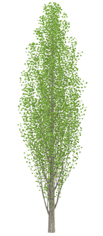 Trees _0003_03