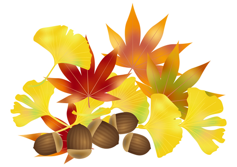 Accor and autumn leaves ginkgo 10