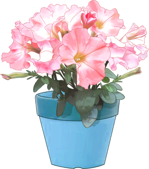 Petunia potted plant