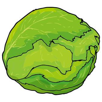 Lettuce / 萵苣 / Lettuce