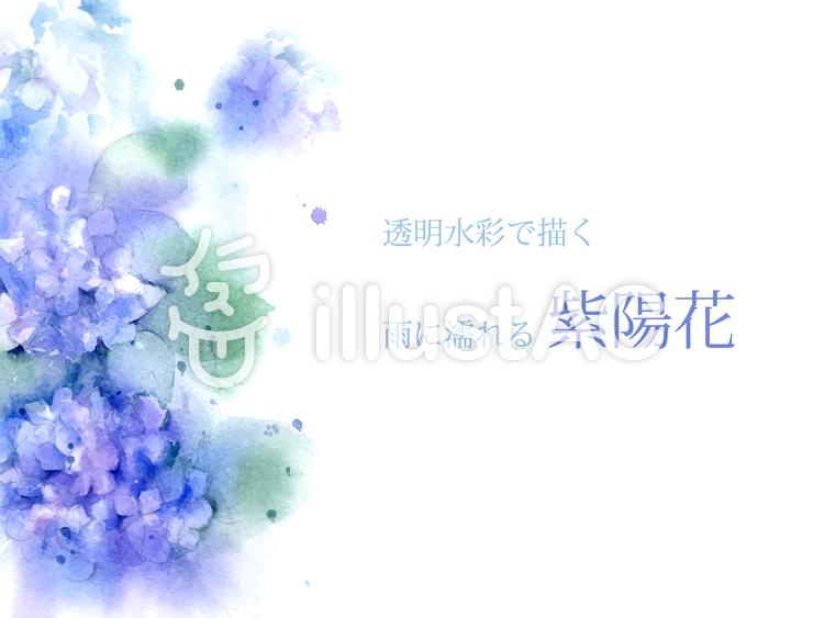 透明水彩で描く雨に濡れる紫陽花