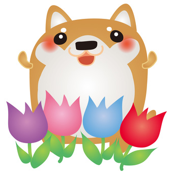 Shiba Inu Tulip