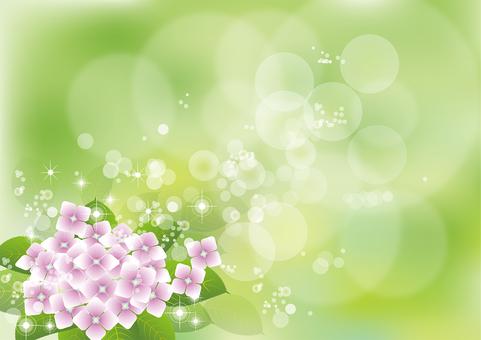 Green & hydrangea 3