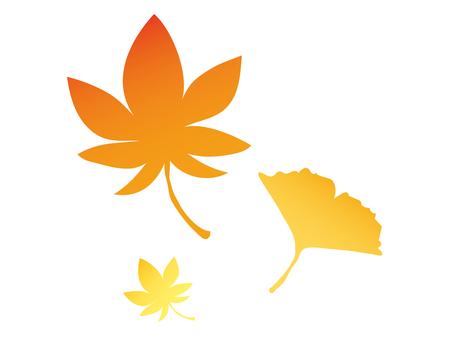 단풍과 은행잎