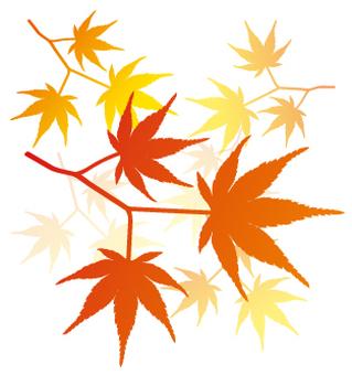 Red leaf cluster _1
