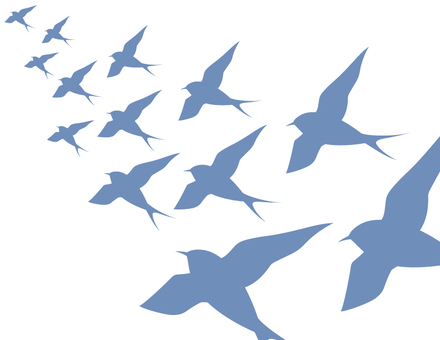 Swallows _ herds _ blue