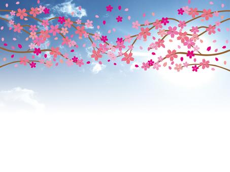 h28 cherry blossoms 07