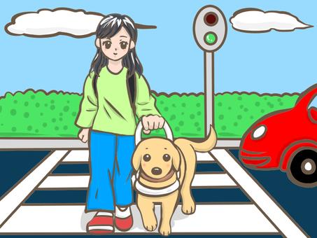 Guide dog crossing the sidewalk