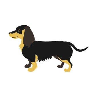 Dog - Dachshund