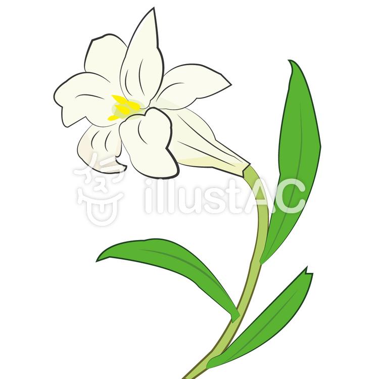 ゆりの花のイラストイラスト No 798853無料イラストならイラストac