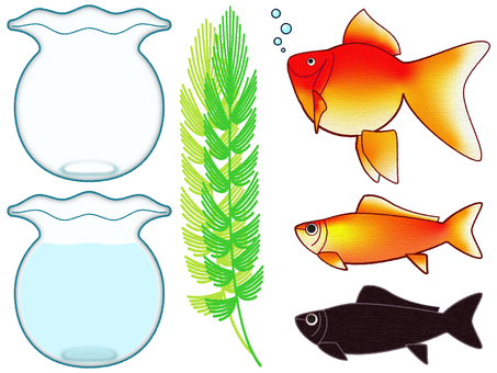 Goldfish (goldfish / fishbowl / aquatic plants)