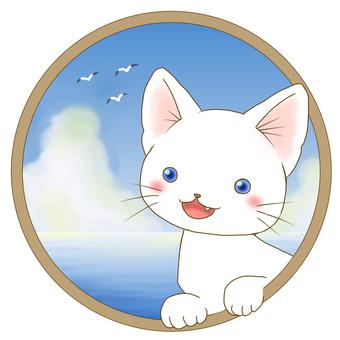 White cat - sea