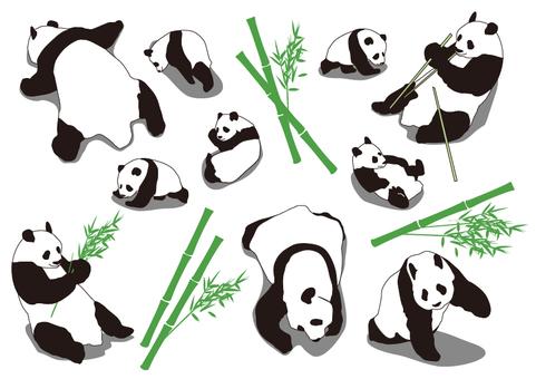 Panda child panda